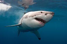 В Египте акула убила туриста