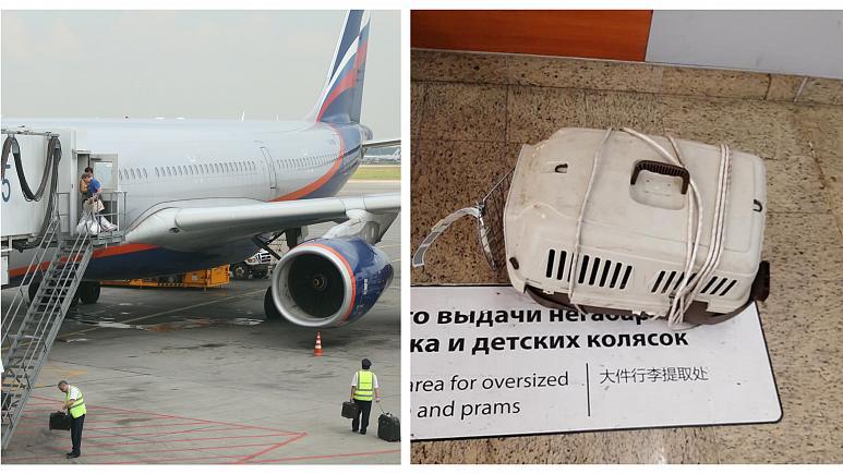 При небрежной транспортировке на рейсе «Аэрофлота» погибли 2 кошки