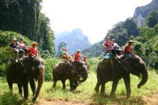 Слон в Таиланде убил немца и ранил российского туриста